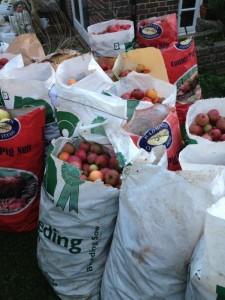Ciderniks apples for cider making