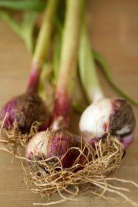 West Garlic