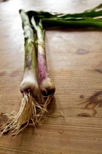 organic wet garlic