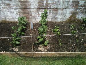 My Garden - veg patch