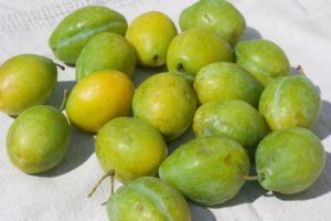 Greengage and Almond Ice Cream - greengages
