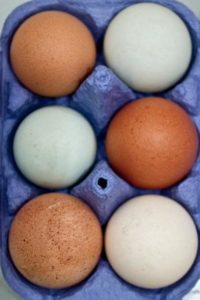 Eggs for making mayonnaise